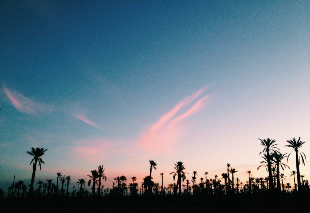 Palmtrees in Marrakech