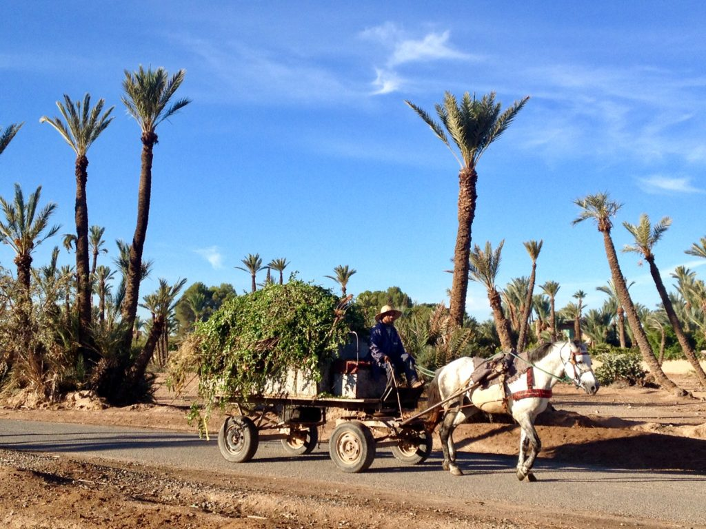 Marrakech morning