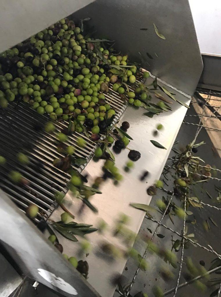 Olives pressing
