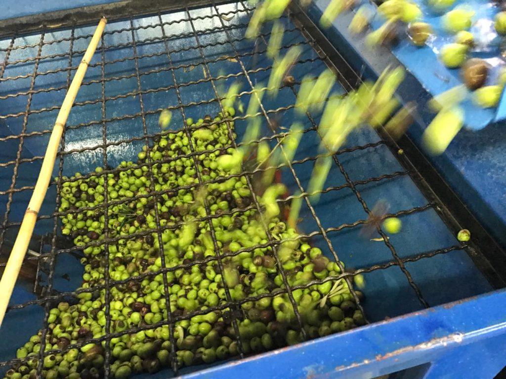 Olives pressing caltagirone