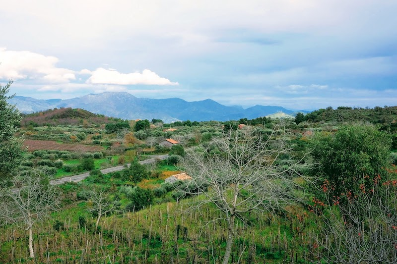 View from vine field on Etna Sicily