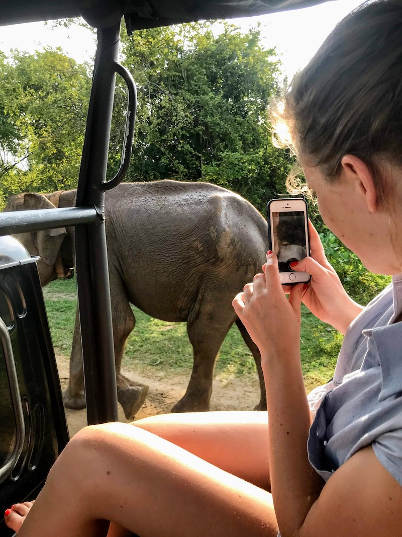 Taking picture of Elephant close by