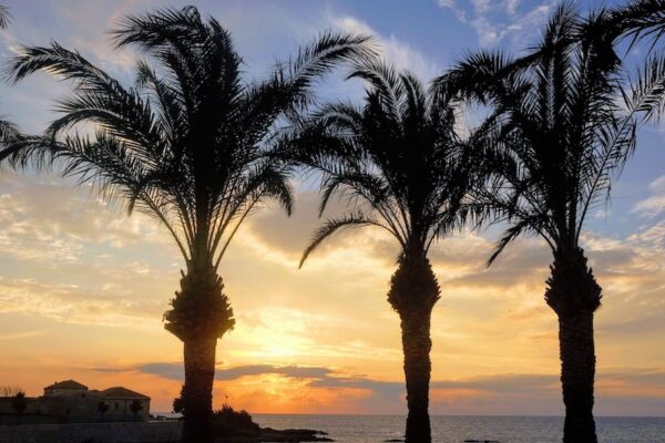Palmtrees and ocean view Marsala